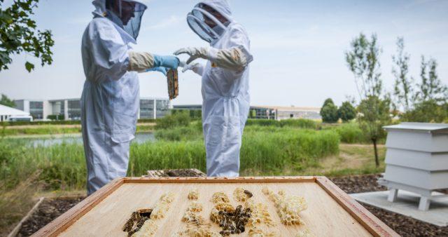 Only the bee's knees should apply: Rolls-Royce seeks volunteers for apiary